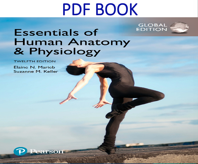 Essentials of Human Anatomy & Physiology 12th Global Edition PDF Book