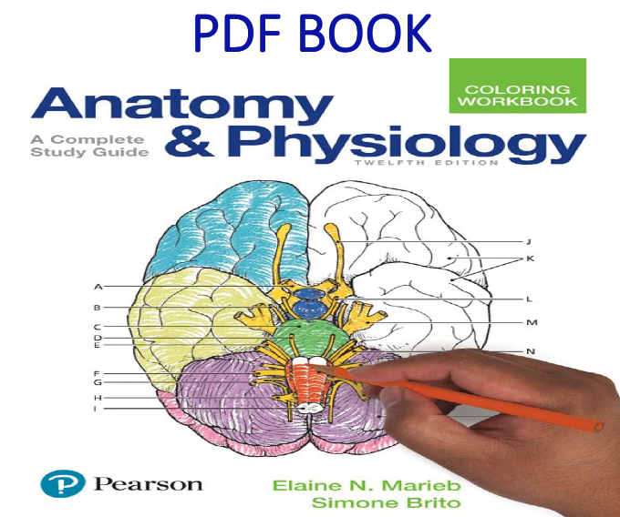 Anatomy and Physiology Coloring Workbook A Complete Study Guide 12th Edition PDF Book